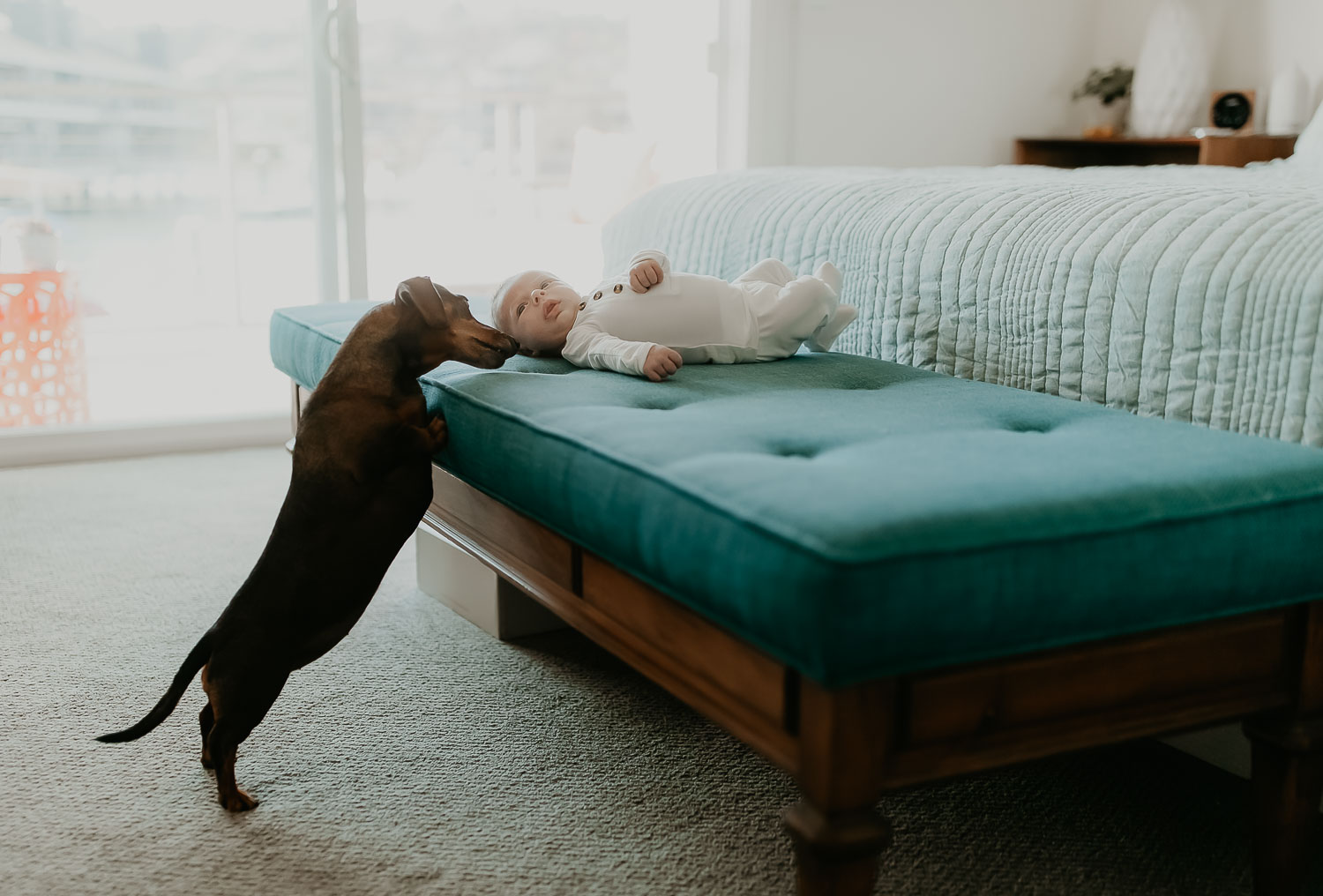 Newborn-Photos-With-Dog